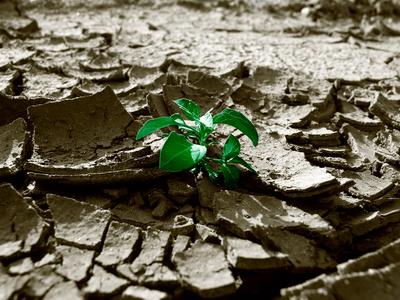 Wachstum braucht Ausdauer