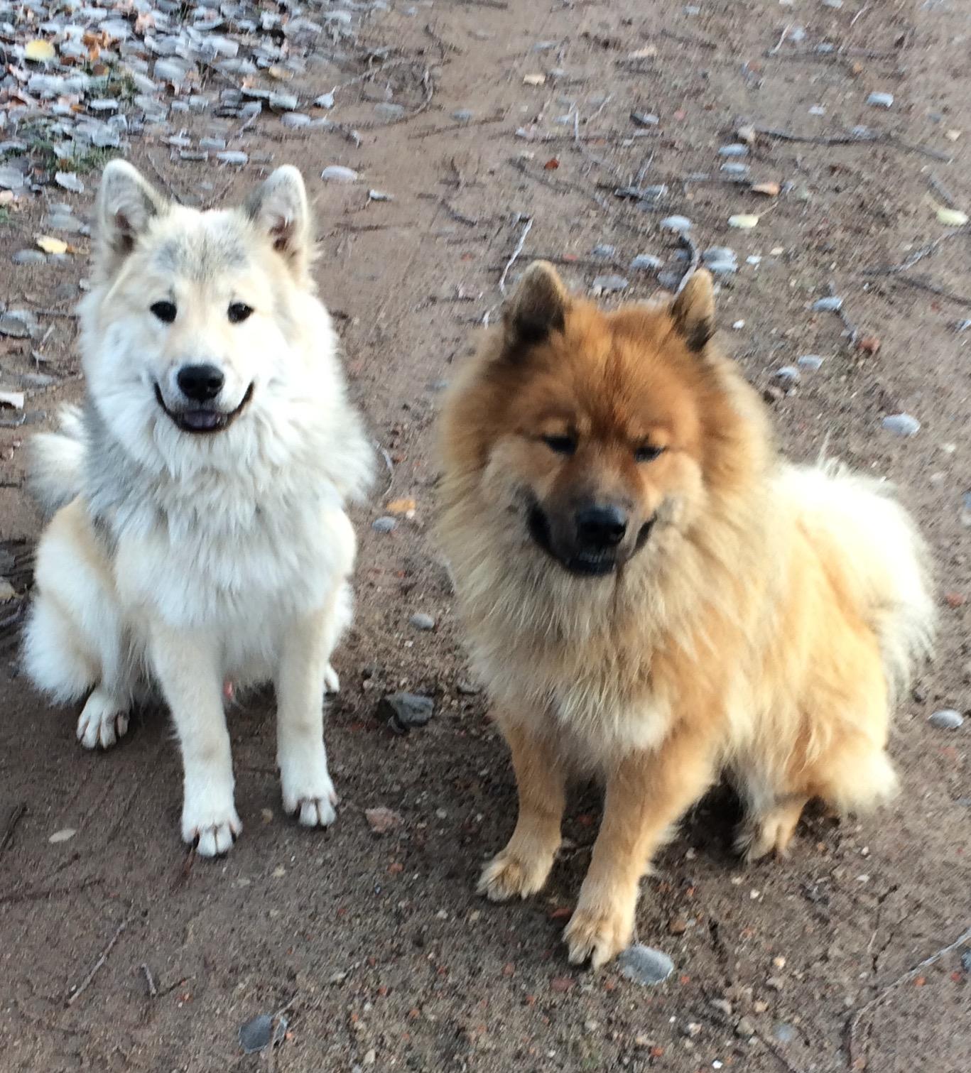 Djego und Artur